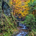 The Ravennaschlucht in Germany's Black Forest by Bernd F. Laeschke