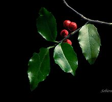Christmas Holly by Rosemary Sobiera