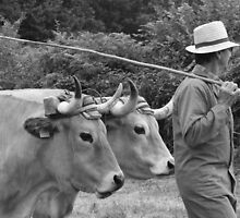French Farming times gone by by Franglais