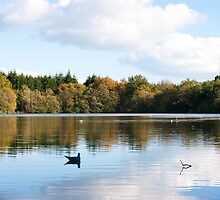 Stover Lake, Devon by sophie-baxter
