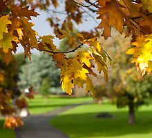 The changing leaves of Autumn by sophie-baxter