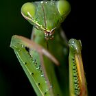 Mantis by Luciano Fortini