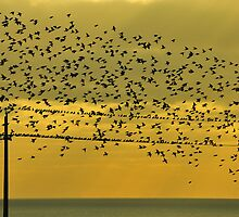 Birds by Jean-Luc Rollier