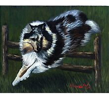 Rough Collie Agility Dog Photographic Print