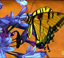 Yellow Butterfly On Agapanthus by moorezart