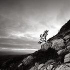 Twistleton Tree (B&W), Ingleton, North Yorkshire by PaulBradley