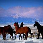 Valley Of The Wild Horses by Jeanne  Nations