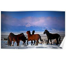 Valley Of The Wild Horses Poster