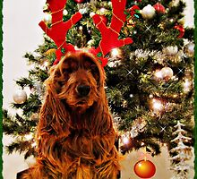 KIM - Christmas card (V) by chelo