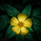 YELLOW FLOWER by RGHunt