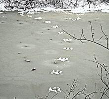 Tracks on a Frozen Creek. by Billlee