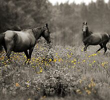 Wild at heart by Lee Burgess