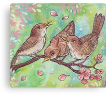 April wrens Canvas Print