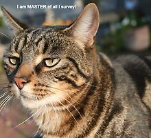 I am MASTER of ALL I survey! by Laurel Talabere