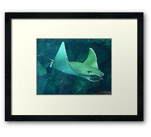 Flying Under Water Framed Print
