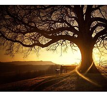 Tree in front of Sunset by NicCaridi