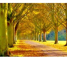 Beautiful Yellow Trees Down a Road by NicCaridi