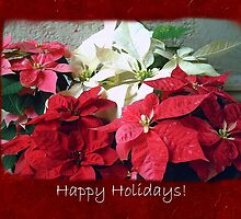 Mixed color Poinsettias 3 Happy Holidays P5F5 by Christopher Johnson