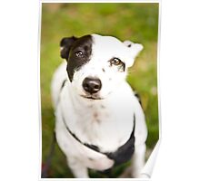 Deaf Rescue Dog *PROCEEDS TO CHARITY* Poster