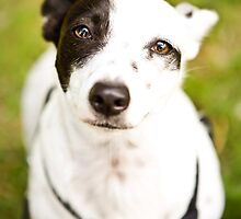 Deaf rescue dog by lauriesbrown