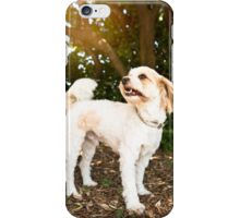 Rescue Poodle X *PROCEEDS TO CHARITY* iPhone Case/Skin