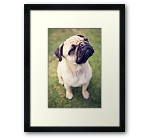 Cheesy Smile Pug *PROCEEDS TO CHARITY* Framed Print