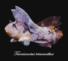 Leaf Scorpionfish (Taenianotus triacanthus) Baby Tee