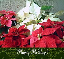 Mixed color Poinsettias 3 Happy Holidays S6F1 by Christopher Johnson