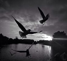 Gulls at Dusk by Christheblue