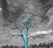 Reach for the Sky by Steve Randall