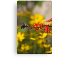 Bumble Bee Red Flower Canvas Print