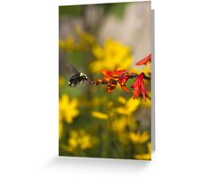 Bumble Bee Red Flower Greeting Card