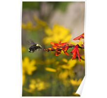 Bumble Bee Red Flower Poster