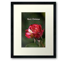 merry christmas- red-white-rose Framed Print
