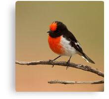 Red capped Robin Canvas Print