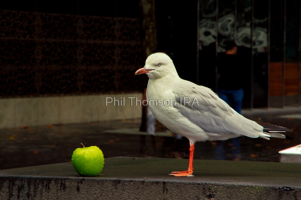 """""""The Apple and The Gull"""" by Phil Thomson IPA"""