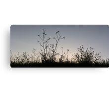 wild fennel Canvas Print