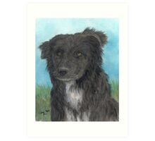 Border Collie Dog Art Portrait Cathy Peek Animal Art Print