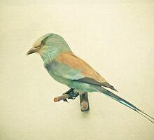 Bird study #2 by Cassia