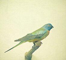 Bird Study #3 by Cassia