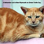 An orange cat in the Bahamas by Laurel Talabere