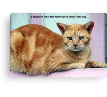 An orange cat in the Bahamas Canvas Print