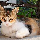 A Regal Cat in Santorini by Laurel Talabere