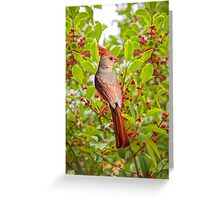 Red Bird Amidst Red Berries Greeting Card