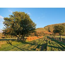 Hillside Holly Photographic Print