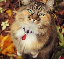 Elsie-cat In Autumn  by meg price