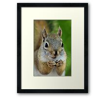 Squirrel's lunch time Framed Print
