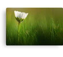 When should I wake up?..... Canvas Print