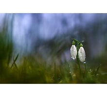 Snowdrops in pair Photographic Print