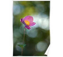 Tiny anemone flower Poster